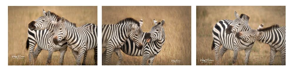 Zebra  6 Photography Art | Images2Impact