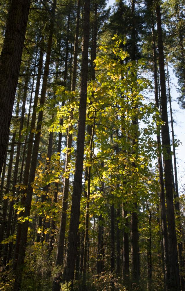 Washington Roadside Trees