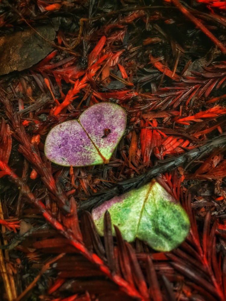 Nature of the Heart
