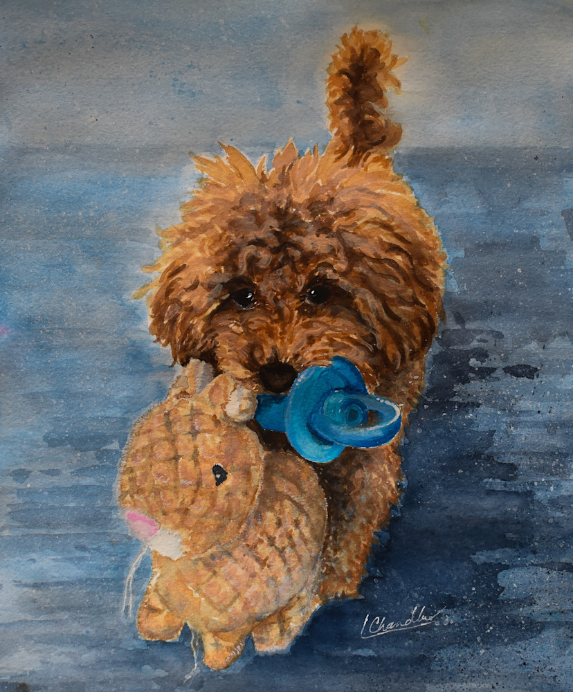 Dog, puppy, cute, animal
