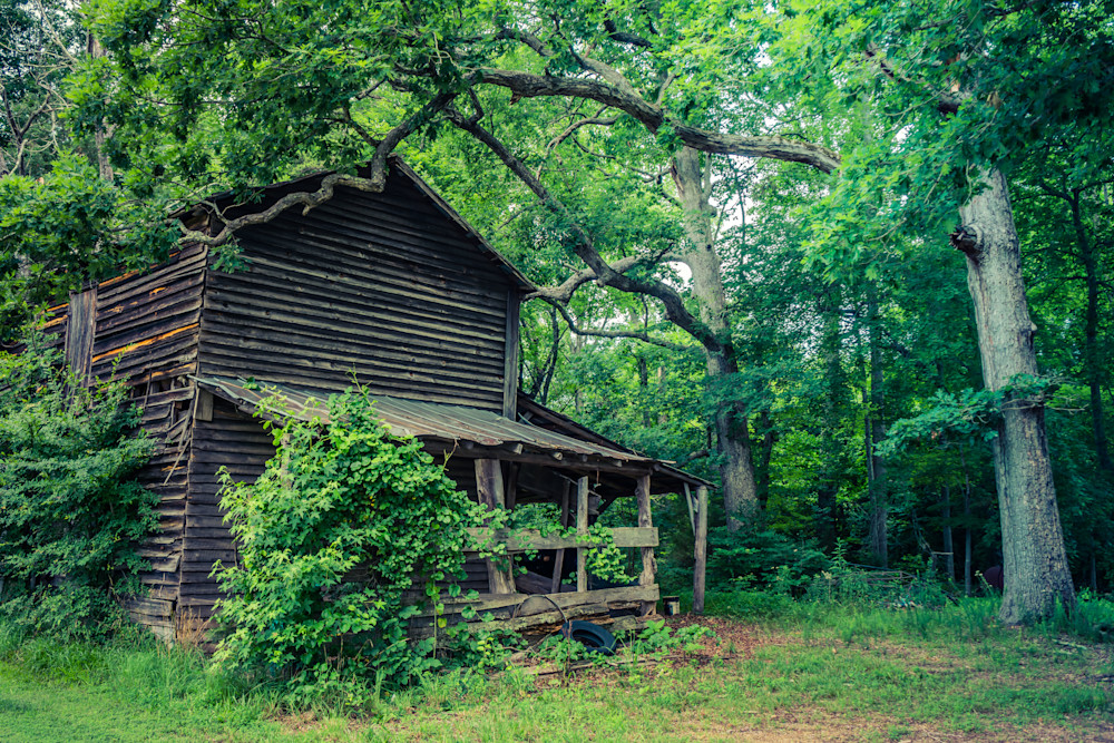 Old Tobacco Barn in Spring