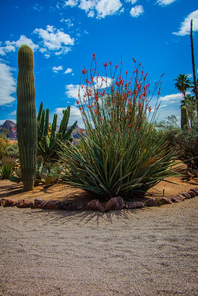 Cactus - Octillo Garden