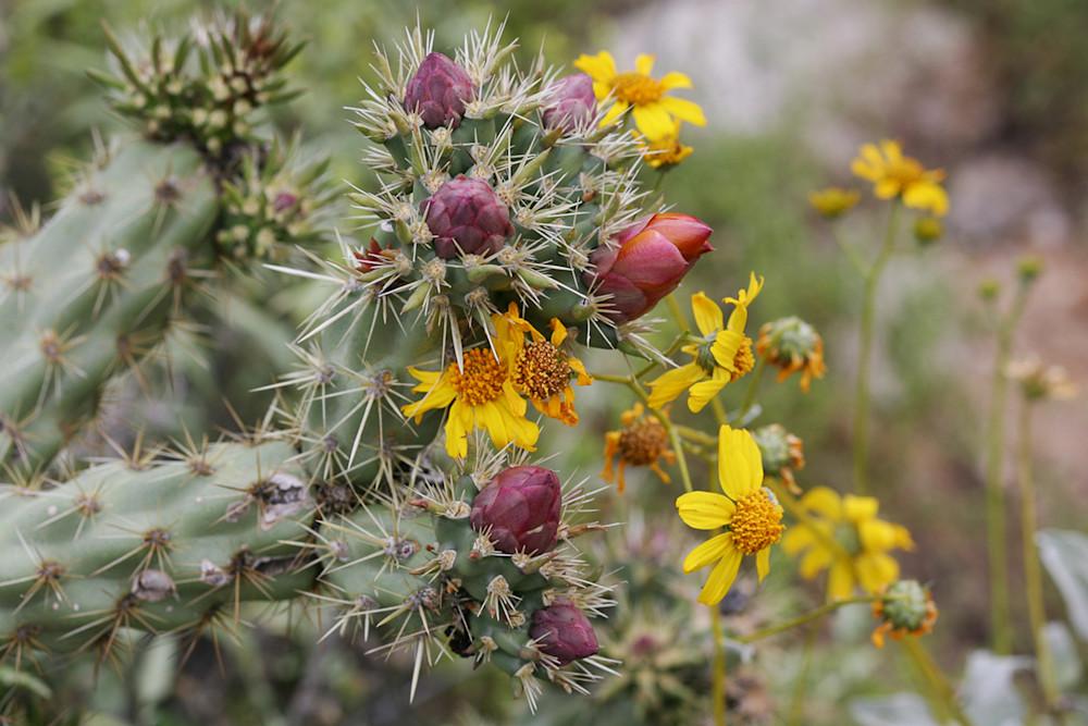 Cactus - Stagehorn H Photo Print