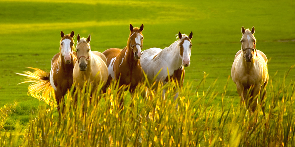 Greener Pastures Pano