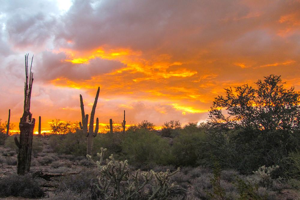 Saguaro Sunset Photo Print