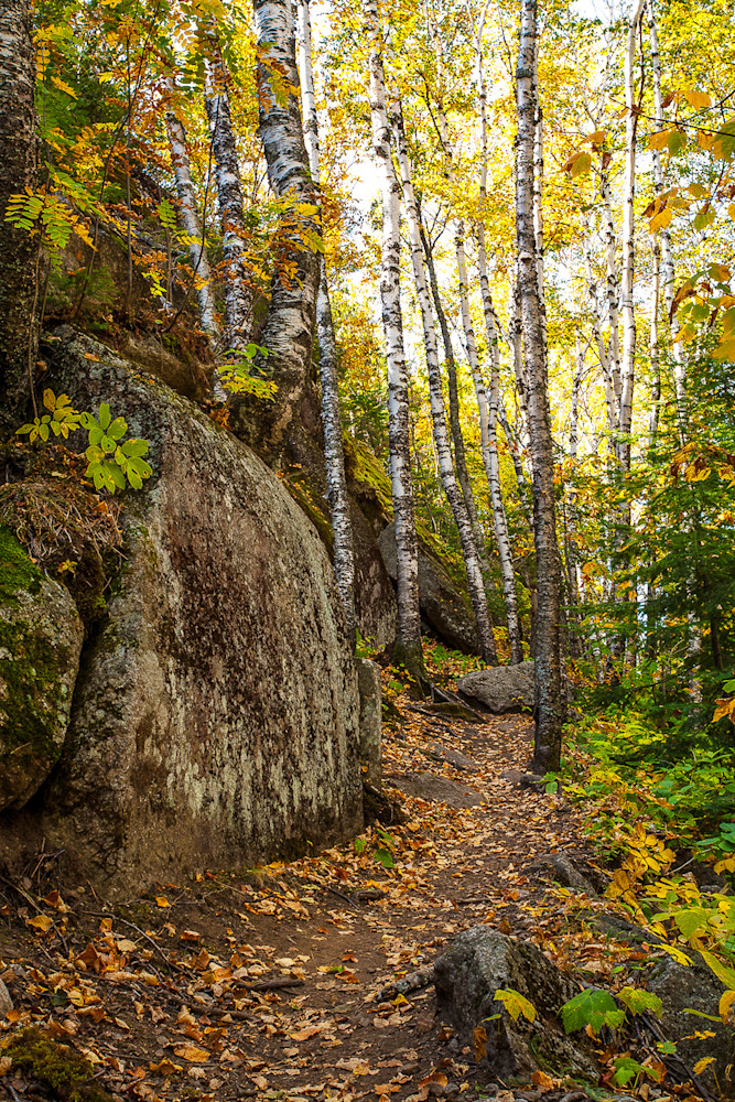 Walk in the Woods Rock