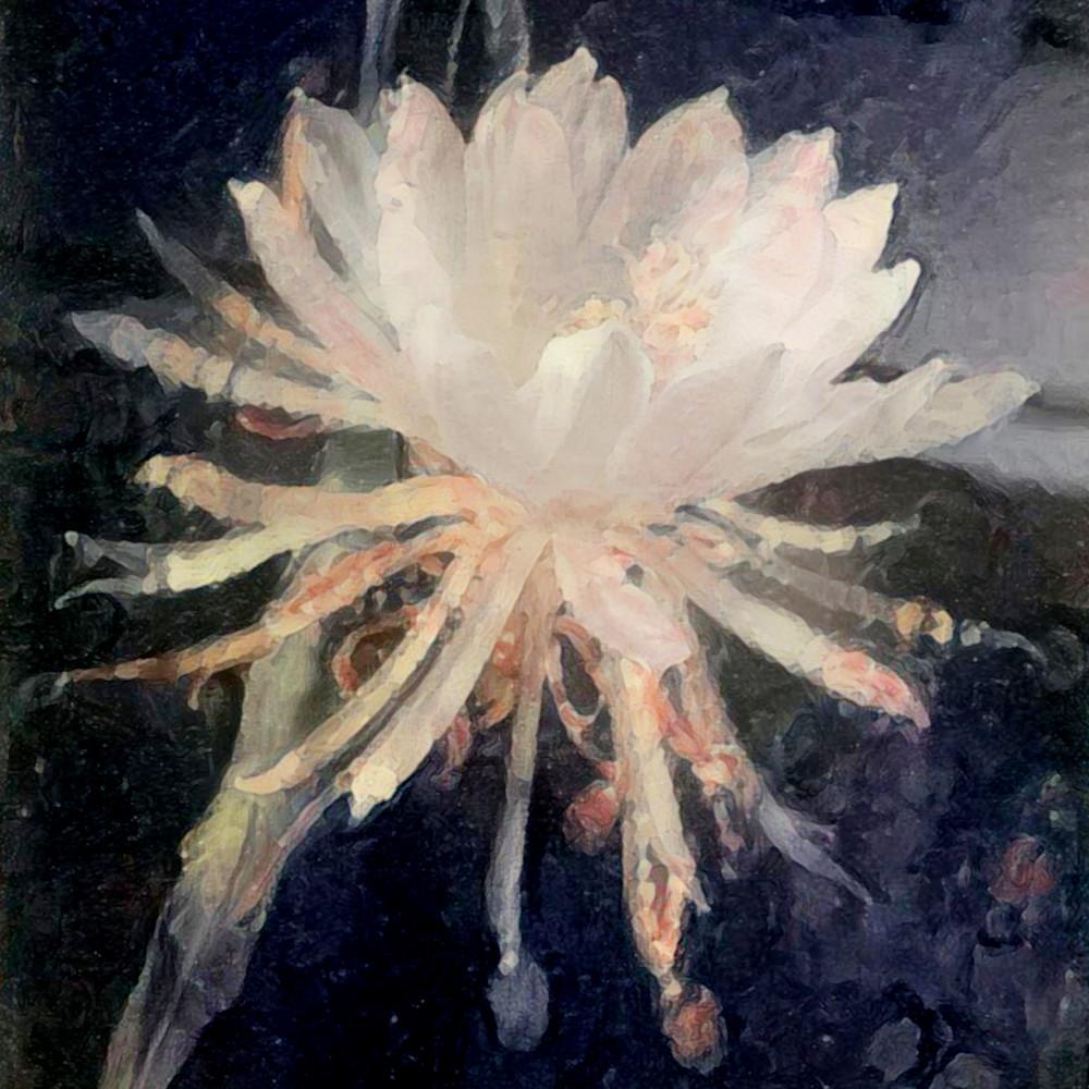 Epiphyllum Art   SkotoArt