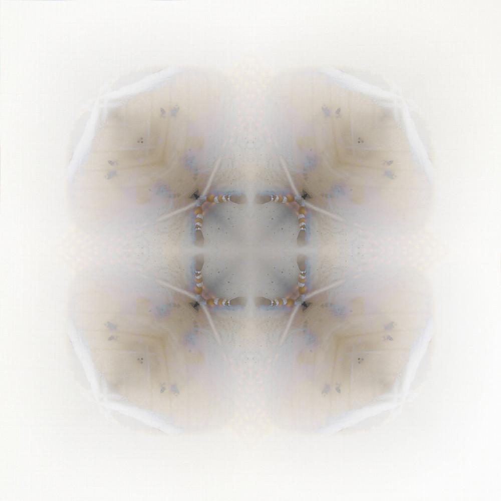 Moth | 4 Folds Art | SkotoArt