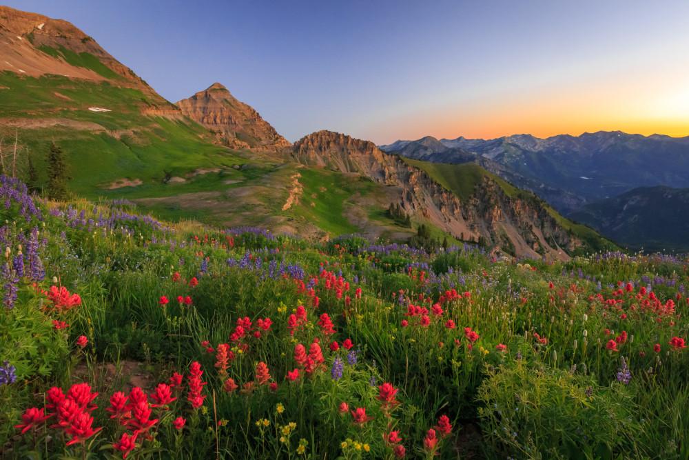 Wasatch Wildflowers In Dawn Light