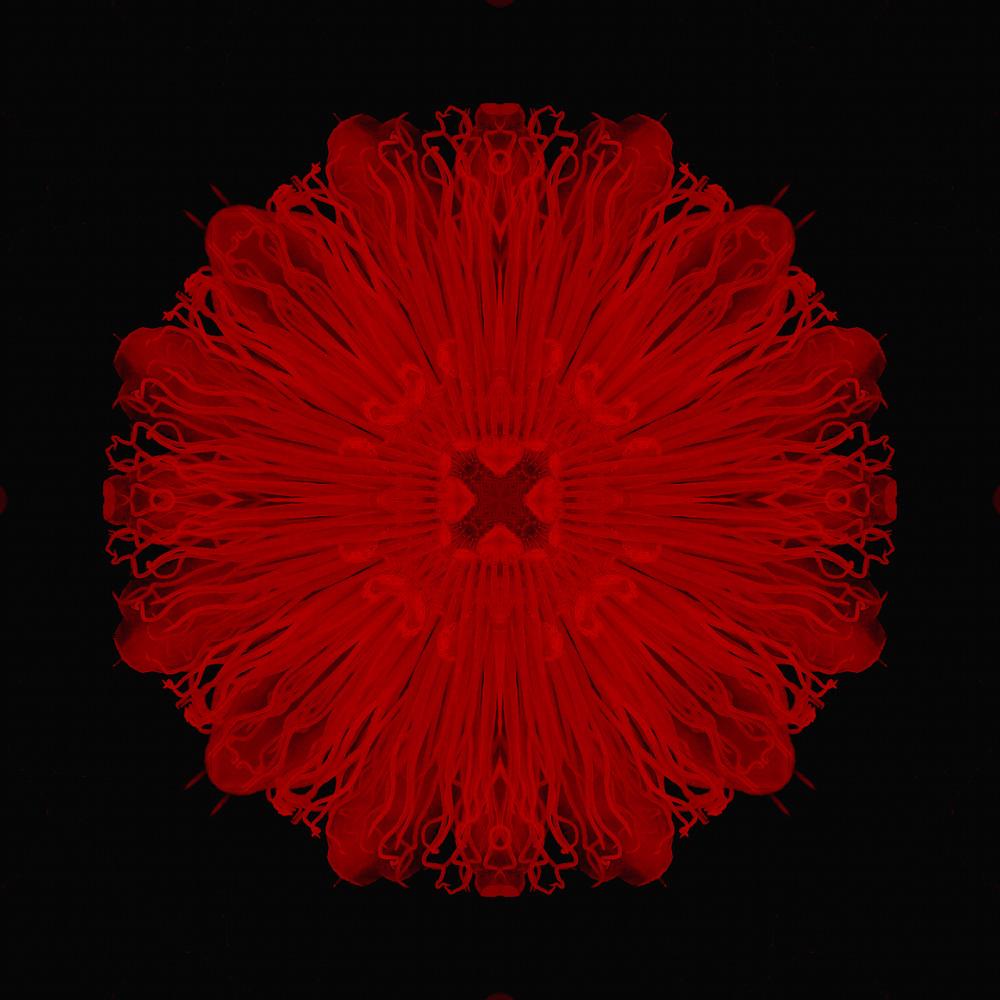 Scarlet Art | SkotoArt