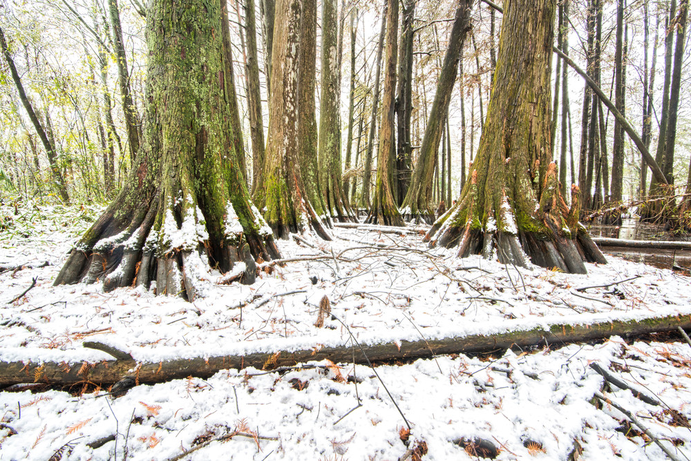 Winter in the Swamps photography