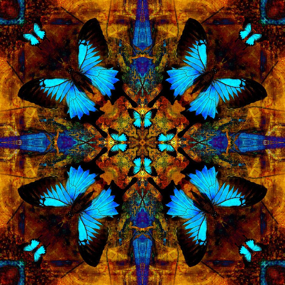 Papilio Blues