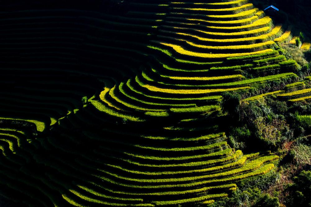 Stepped Rice Fields in Yen Bai Morning
