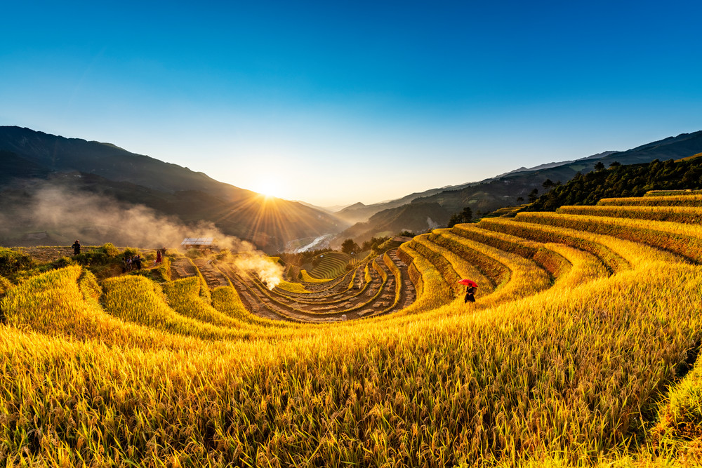Terraced Rice Field Sunset in Sang Nhu Mu Cang Chai