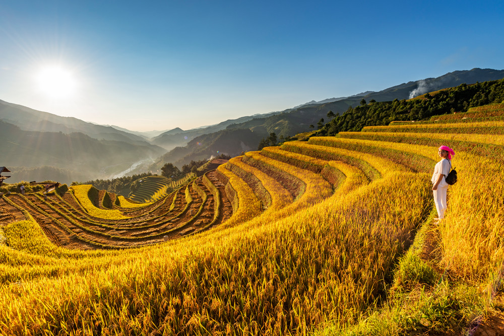 Fully Harvested Terraced Rice Fields in Sang Nhu Mu Cang Chai