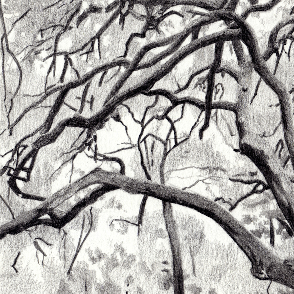 Live Oak, Drawings, The Art of Max Voss-Nester