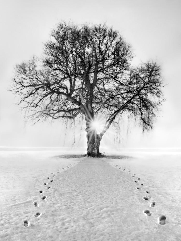 Meet Me Behind The Kissing Tree