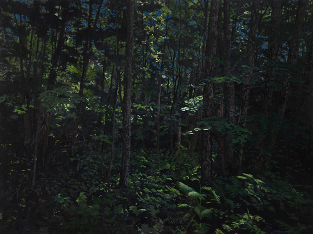 forest nocturne, vermont, forest, nightscape, landscape, forest at night, new england, nocturne