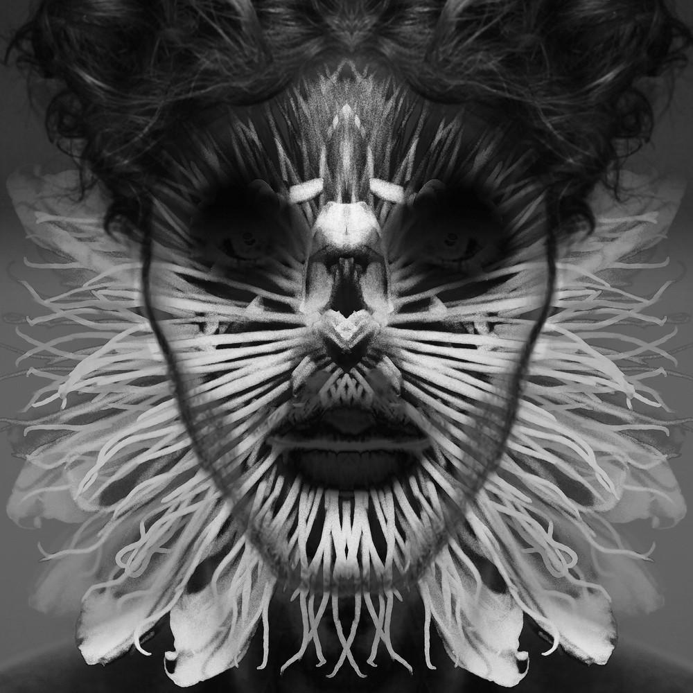 Passiflora Wraith Art | SkotoArt
