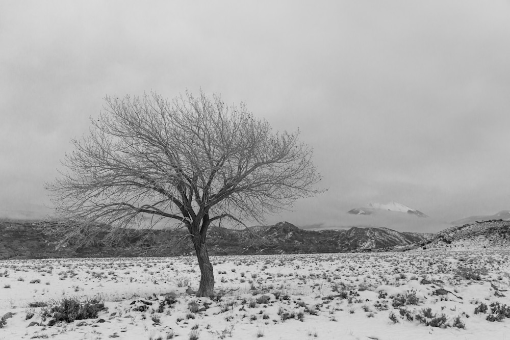 Lone Cottonwood On The Range Photography Art | David N . Braun Photography