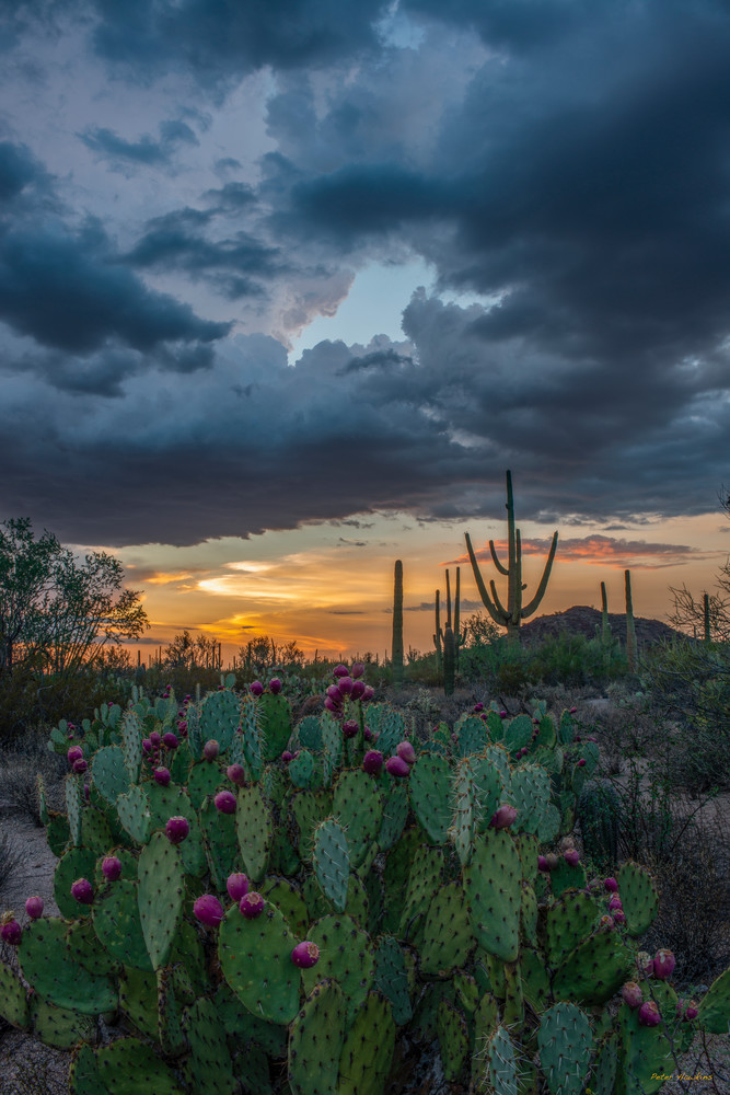 Dp585 Prickly Pear Sunset Art | Peter Hawkins Photography