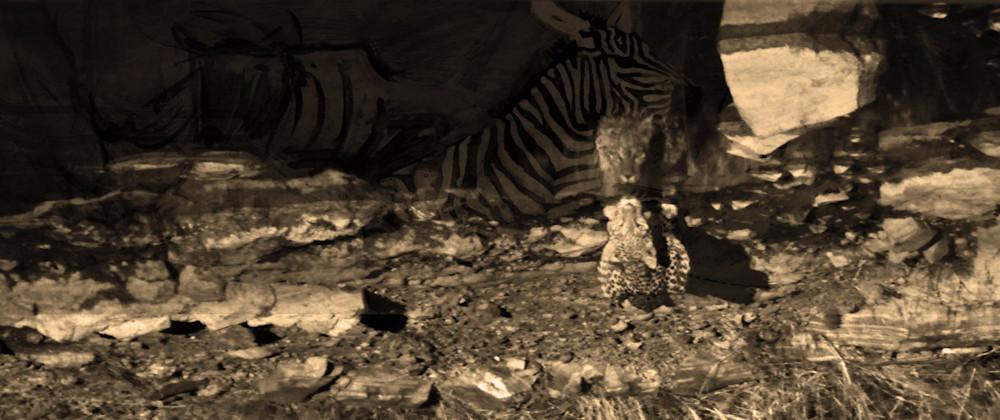 Zebra Dreams Art | simon campbell
