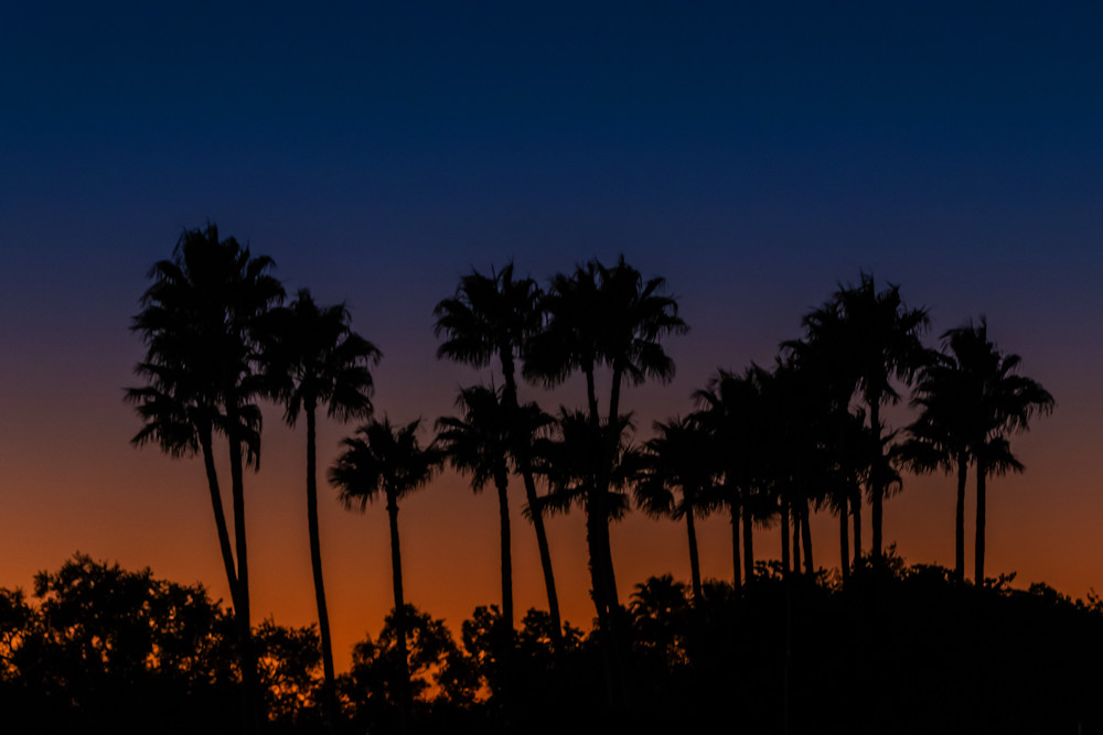 Palm Tree Sunset - Tropical Wall Art | William Drew