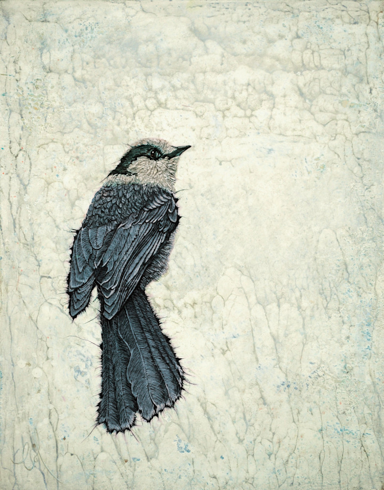 Canada Jay I | Col Mitchell Contemporary Paper Artist