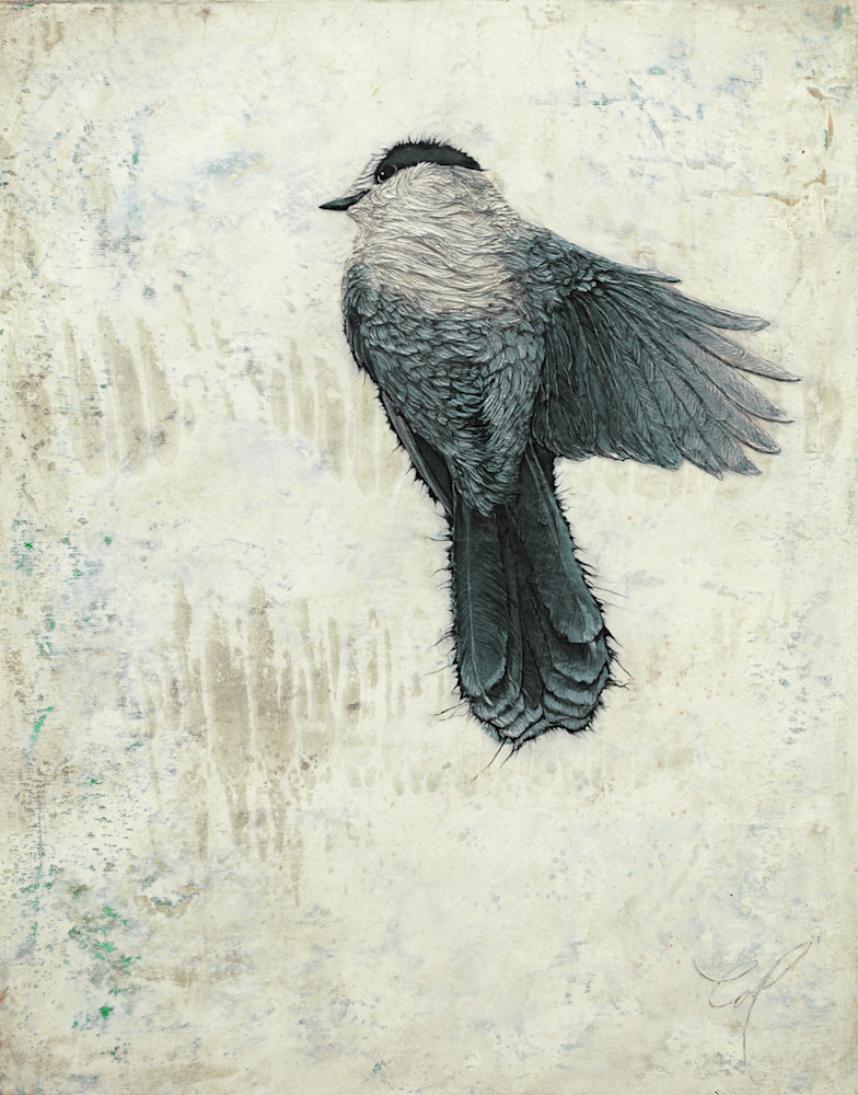 Canada Jay II | Col Mitchell Contemporary Paper Artist