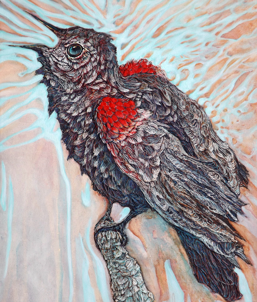 Virtuoso, Red-winged Blackbird | Col Mitchell Contemporary Paper Artist