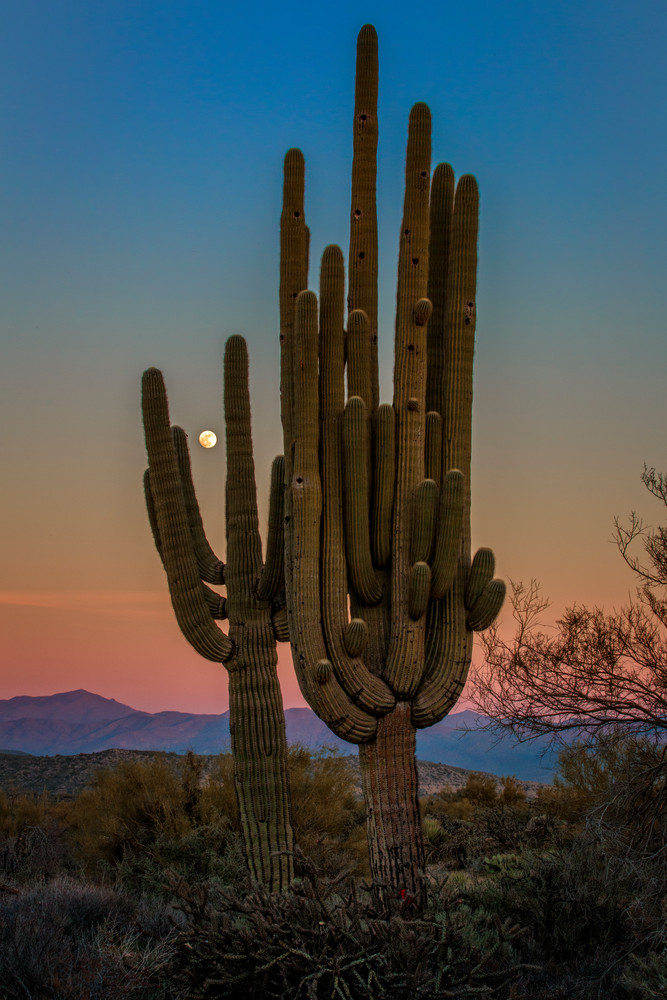 Moonrise Over Tonto by Rick Berk