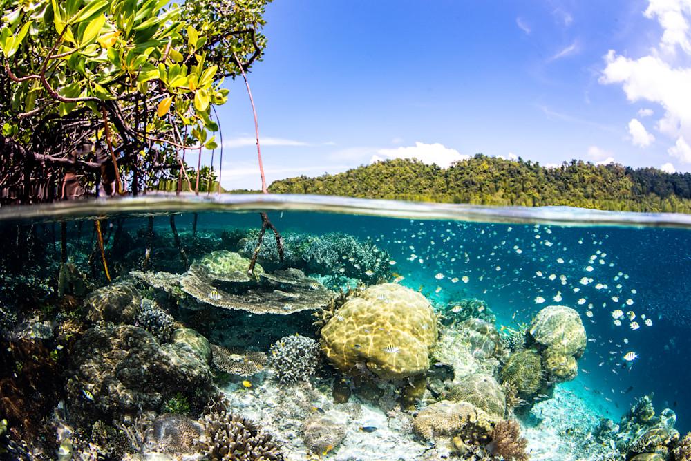 Mangrove Split is an over-under fine art photograph for sale