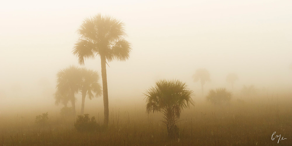 Constance Mier Photography - artistic Florida nature scenes