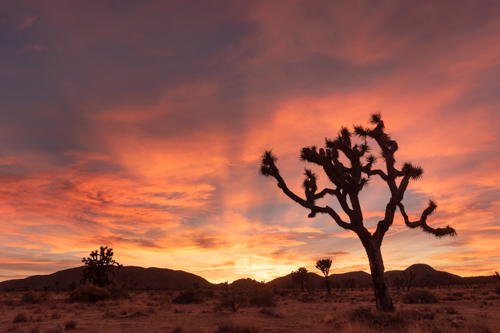 """Desert Evening"" Photograph for Sale as Fine Art."