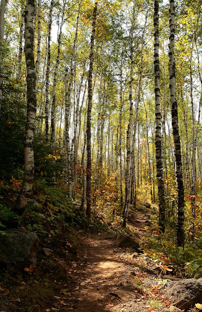 Walk in the Woods V Photo Print