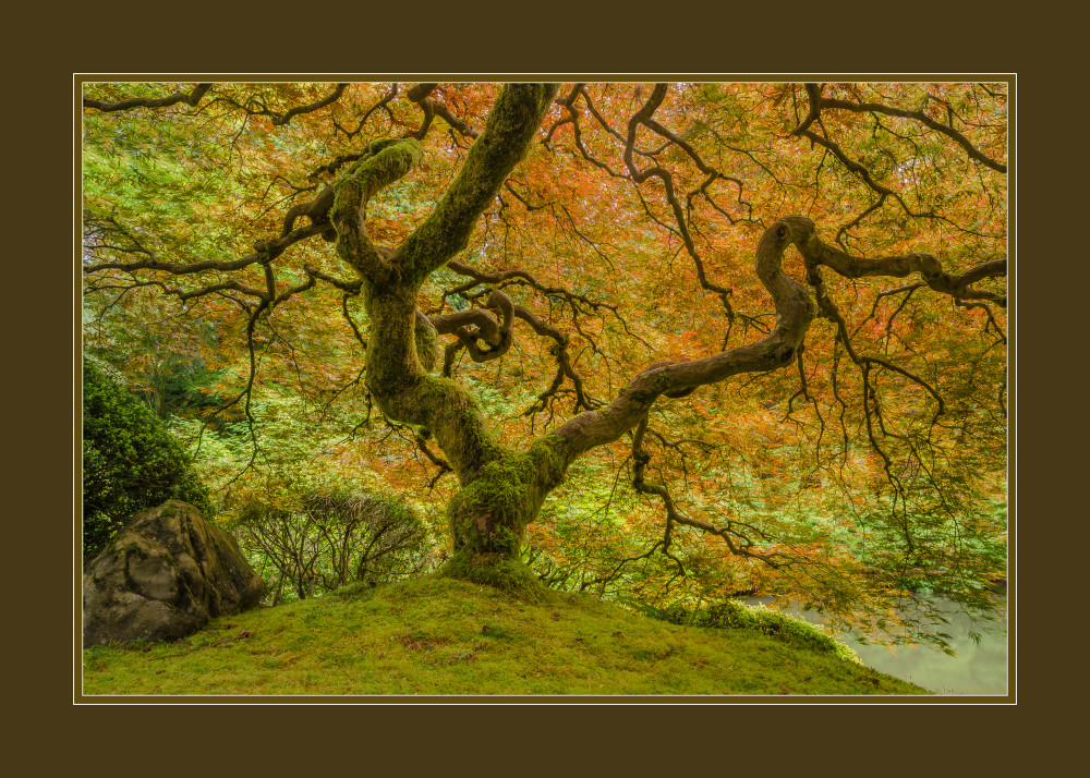 Mossy Maple With Border Art | Jesse McLaughlin Photography