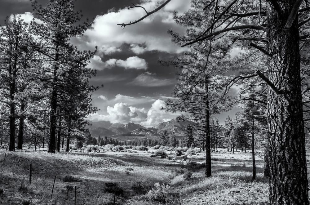 Mountain View in Idyllwild California