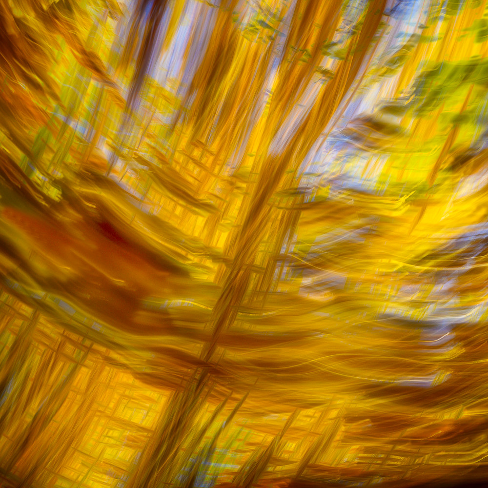 Abstract print fall leaves