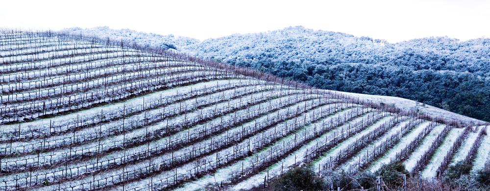 Snowy Vineyard by Josh Kimball Photography