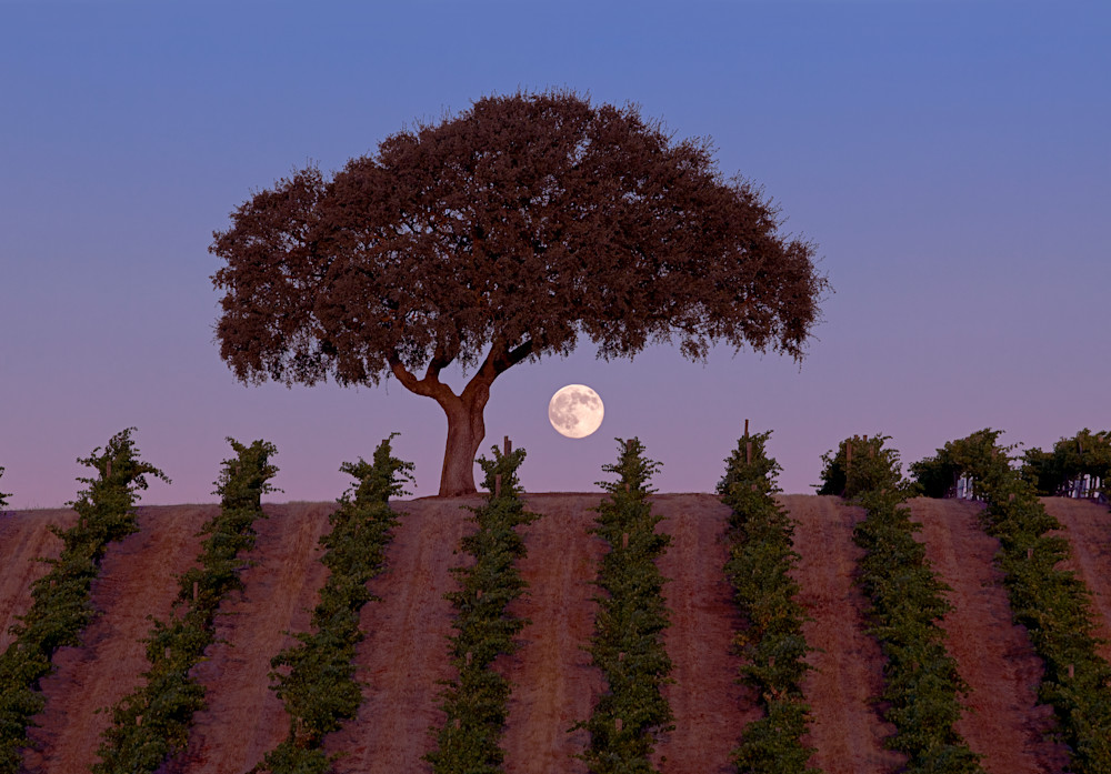 Harvest Moon by Josh Kimball Photography