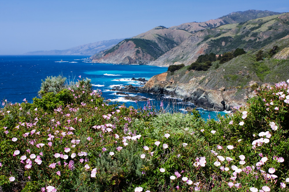 Big Sur Bloom by Josh Kimball Photography