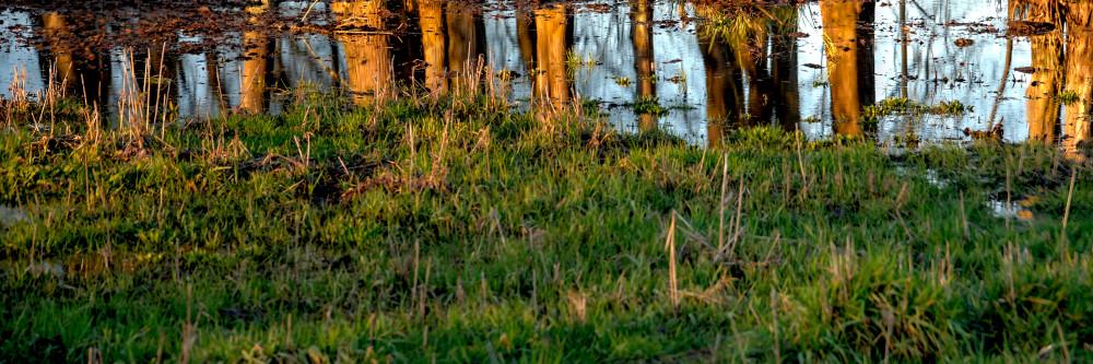 Reflected Sunrise Trees