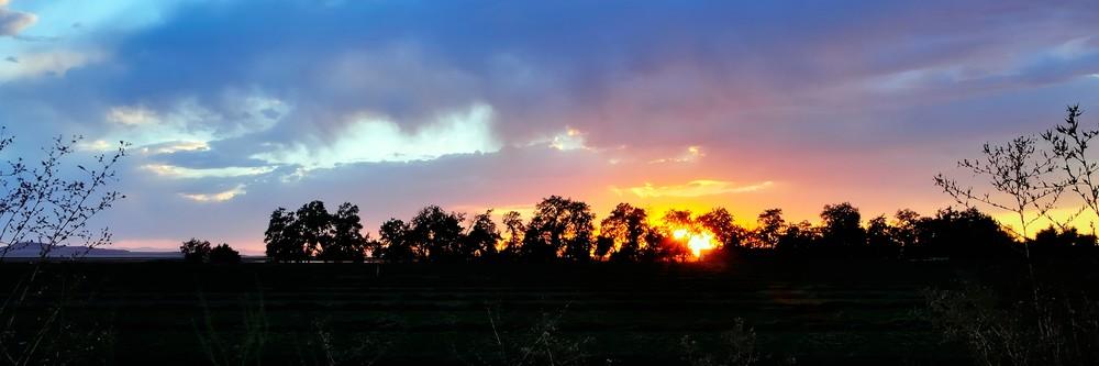 Tree Line Sunset Fall