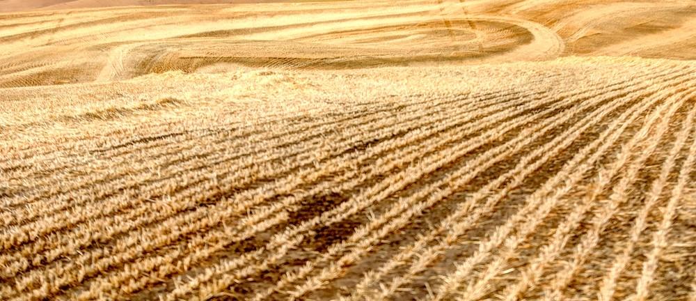 Field Lines 1541