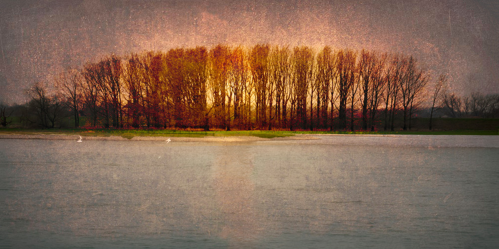 These trees caught my eye while floating down the Rhine River in Germany. Gallery wrapped canvas print available in several sizes.