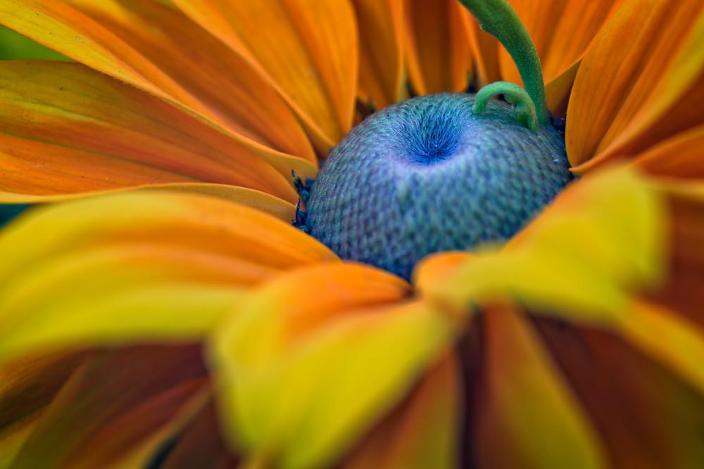 Daisy Closeup by Rick Berk