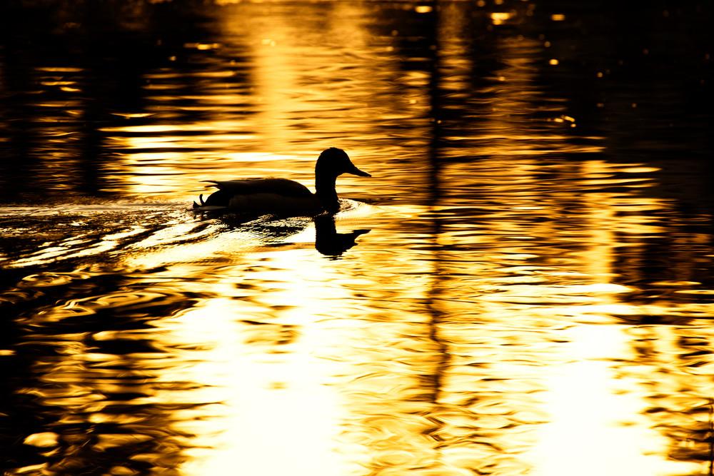 Morning Swim by Rick Berk