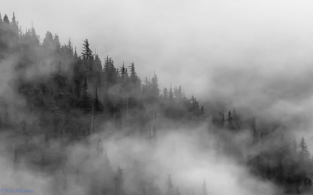 Tongass National Forest Milennial Sitka Spruce in the Everpresent Mist   Endicott Arm, Juneau, AK