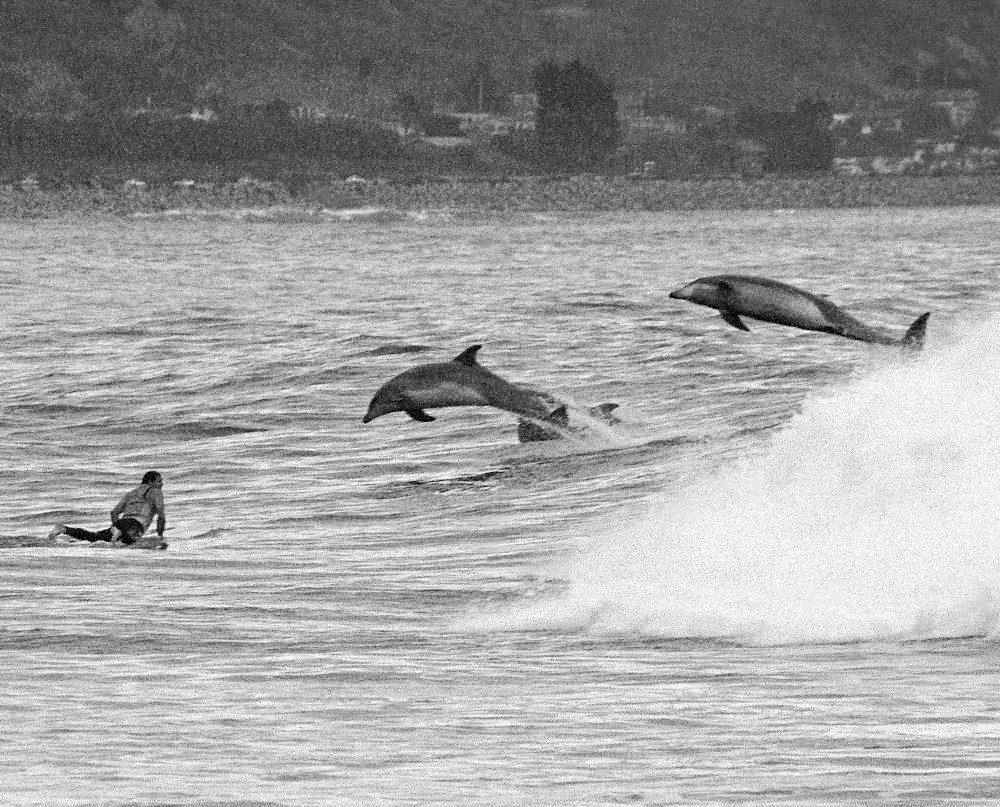 Surfer & Dolphins by Josh Kimball Photography