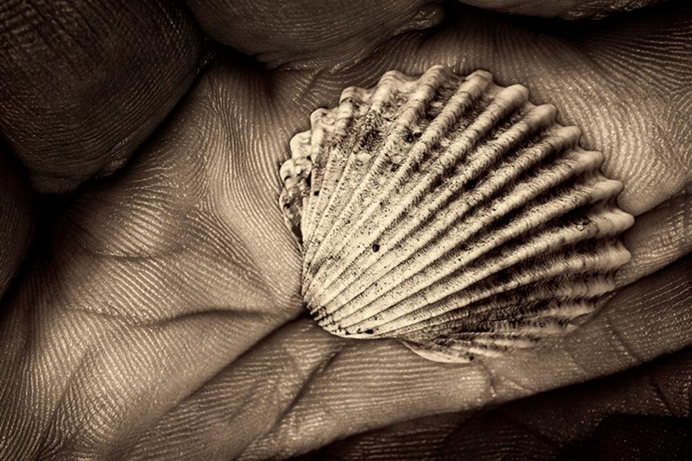 A shell in a hand of time | Koop kunstfotografie print online | A-Galleria